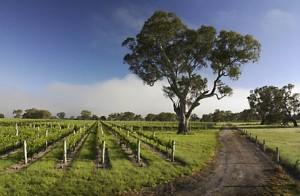 importateru vin australien