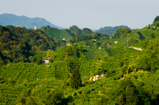 Italy, Soligo, Collagù, vineyards