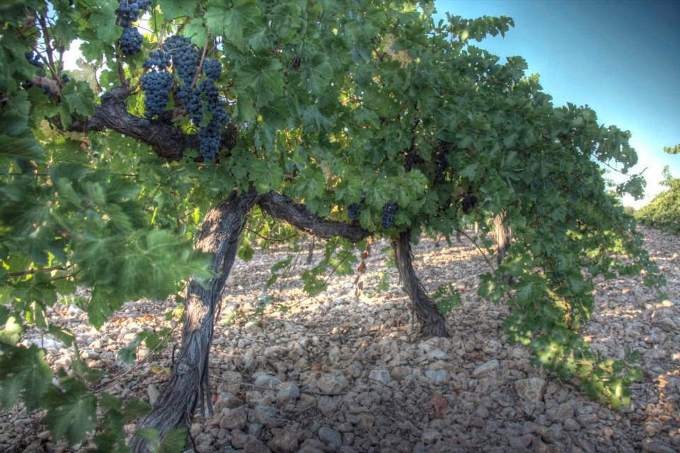 importateur vins espagnols