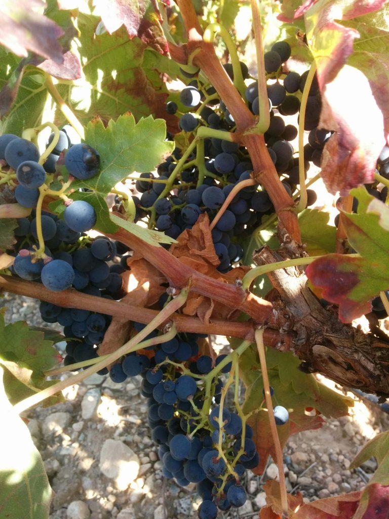 importateur de vins espagnols