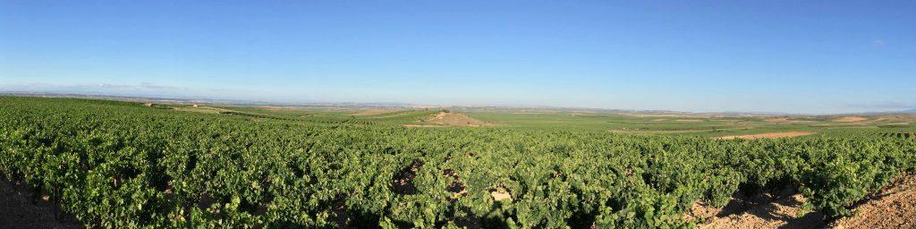 importateur de vins espagne