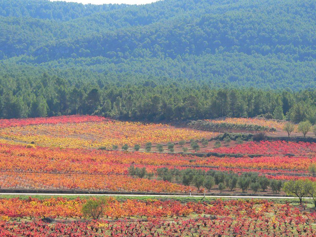 viñas otoño 3
