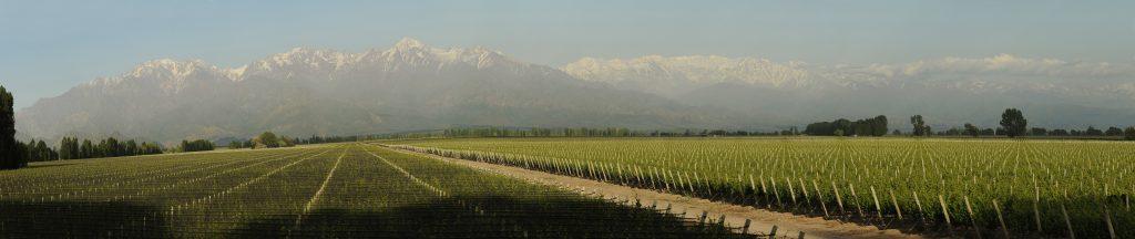 vins chiliens