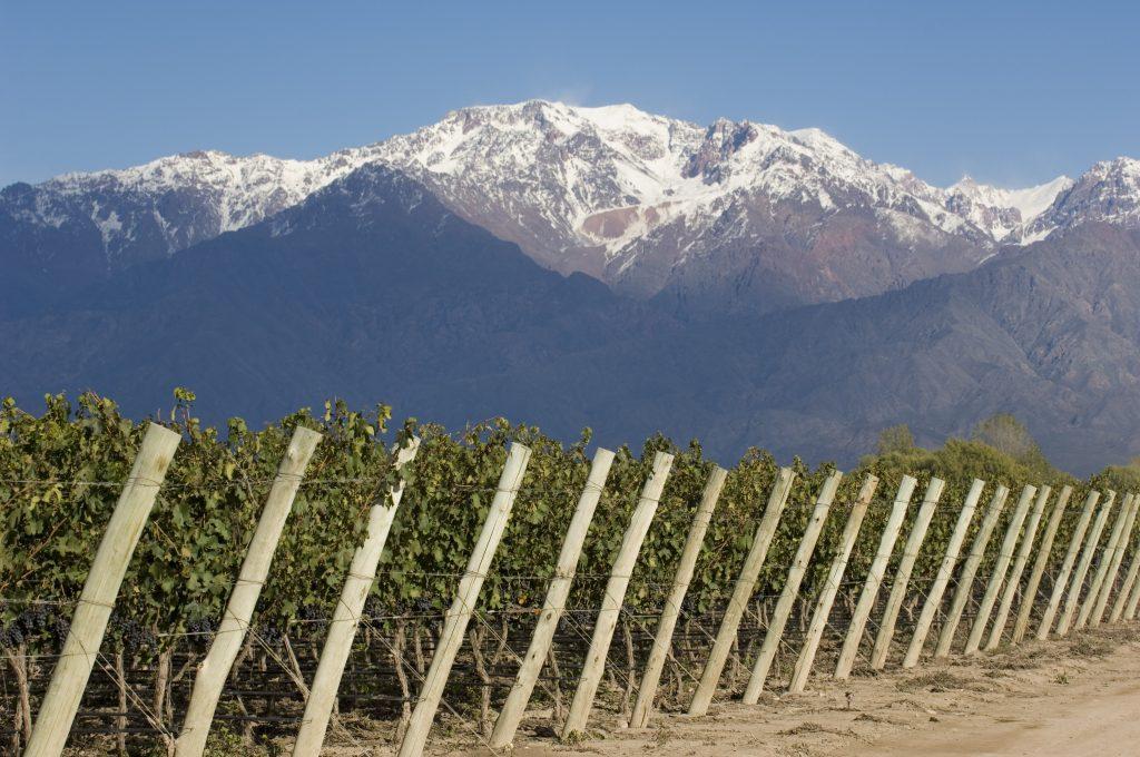 les cépages - importateur de vins argentins