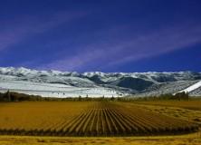 Un beau vin d'été: Tamari Malbec 2011