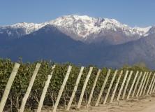 Mendoza: Au coeur de la plus grande région viticole d'Argentine