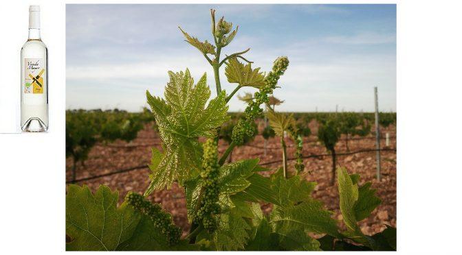 VERDUGUEZ – Vereda Mayor Verdejo – Vin Espagnol