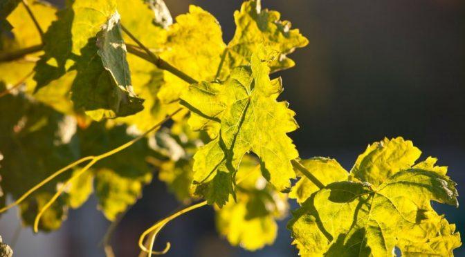 Les importations de vins étrangers à la hausse en 2016 !