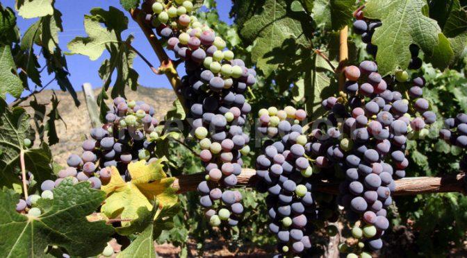 Petit apperçu du vin et de la vigne au Chili et en Argentine !