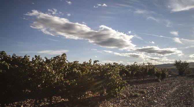 Bodega Mateos – Vins Espagnols !