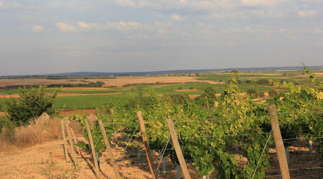 vignes verduguez